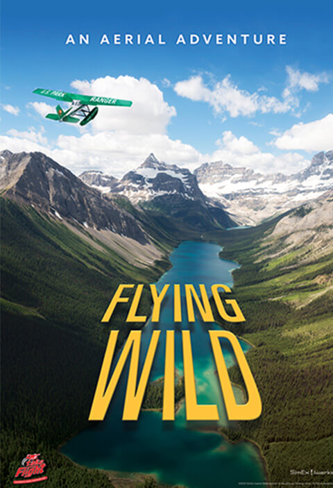 flying wild now playing